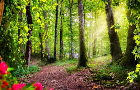 Green forest in Montenegro