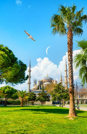 Seagulls over Blue Mosque in Istanbul, Turkey Banco de Imagens