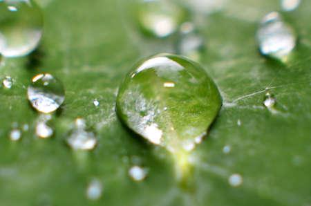 Der Rest des Morgentaues ist klar, frisch klebt an den grünen Blättern Standard-Bild