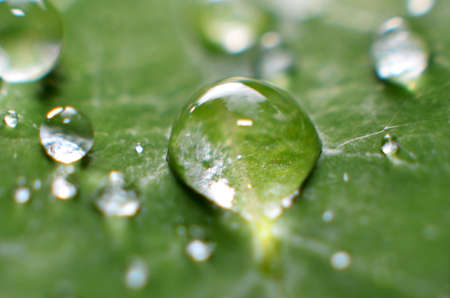 The rest of the morning dew is clear, fresh sticking to the green leaves Stock Photo