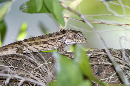 Lizard include quadrupeds with long fingers snake-like heads scaly bodies long tails and have the advantage of changing their skin color to outwit their prey or opponents.