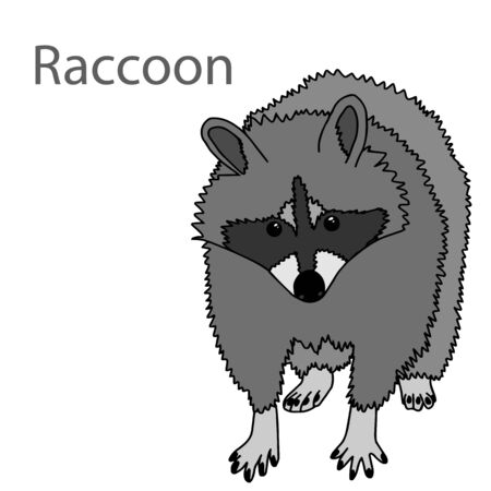 Raccoon - realistic graphic vector illustration. Black and white portrait in style of engraving, isolated on a white background, design element for template. Cute animal of North America.