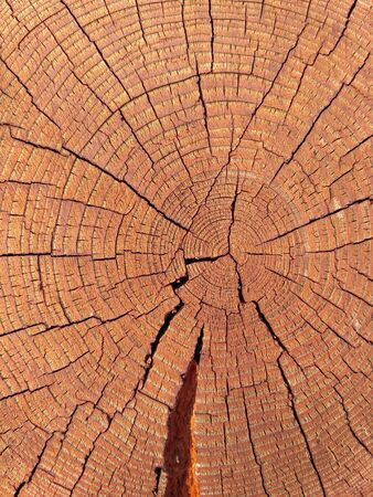 Closeup of round slice of tree with annual rings. Sawn pine trunk with textured cracked surface. Building material. Timber harvesting. Structured tree trunk. Natural organic texture. Wood cutting