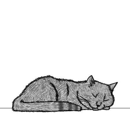 Drawing of a cute sleeping cat, resting its head on its paw. Black and white illustration of an animal. Realistic image of an animal. Vector isolated illustration character. Ilustrace