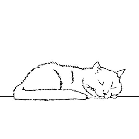 Drawing of a cute sleeping cat, resting its head on its paw. Black and white illustration of an animal. Realistic image of an animal. Vector isolated illustration character. Line art drawing. 일러스트