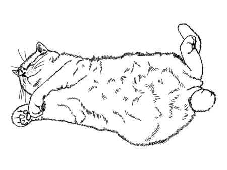 Drawing of a cute sleeping cat lying on its back with outstretched legs. Black and white illustration of an animal. Realistic image of an animal. Vector isolated characters line drawing illustration.