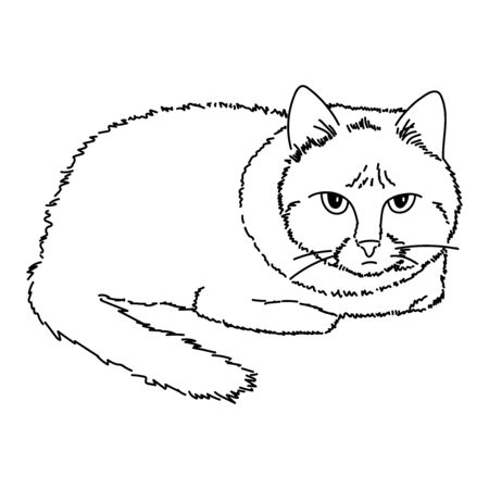 A draA drawing of a cute sitting cat, tucking paws under the body. Black and white illustration of an animal. Realistic image of an animal. Vector isolated character illustration. Line drawing. Stock art.wing of a cute sitting cat, tucking paws under the body. Black and white illustration of an animal. Realistic image of an animal. Vector isolated character illustration. Line drawing. Stock art. Vector illustration Ilustração