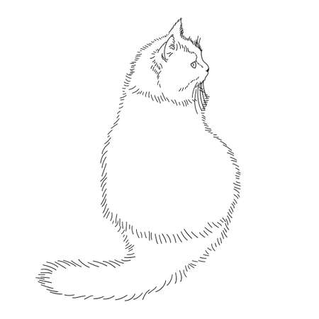 Drawing of a fluffy cat sitting with its back to us and looking away. Black and white linear isolated illustration. Linear style. Stock vector image. Vetores