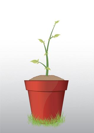Tree in pot Illustration
