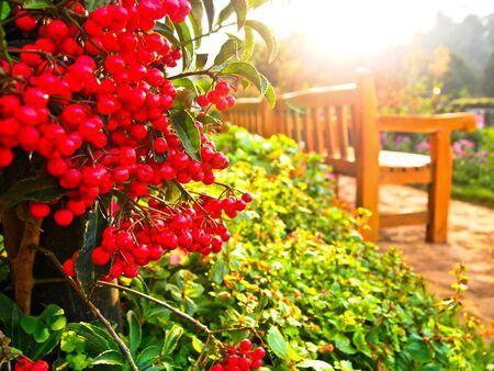Red fruit in garden JPG Stock Photo