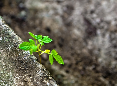 Petite plante sur concrete1 Banque d'images