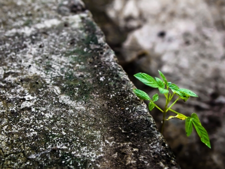 Small plant on concrete2 photo