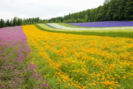 Colorful flower blossom garden in Japan6 photo