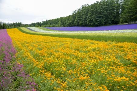 Colorful flower garden2 photo