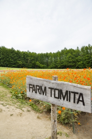 Flower in Tomita Farm Japan Stock Photo