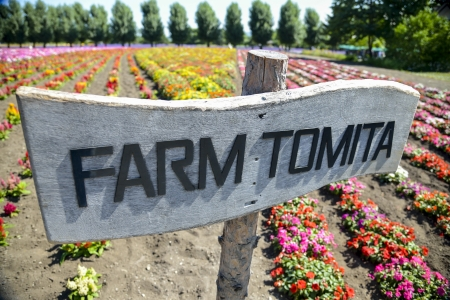 Colorful flower in Farm Tomita Stock Photo