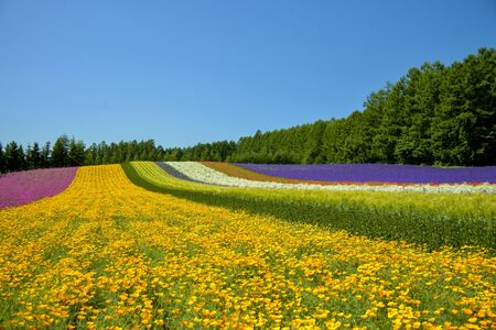 Colorful flower in the row with blue sky