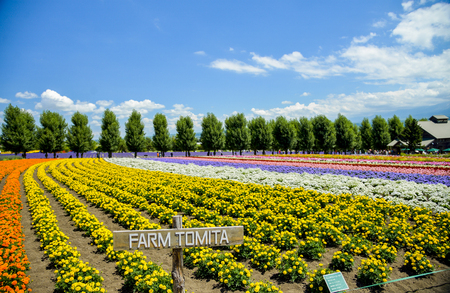 Row of colorful flower in Tomita farm Stock Photo