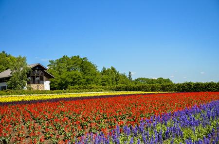 Rangée de fleurs colorées avec le soleil