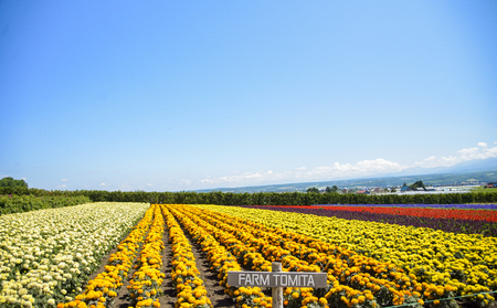 Row of colorful flowers with sunshine photo