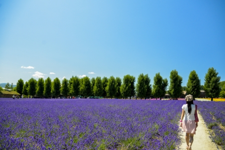 Walk in Lavender garden Stock Photo