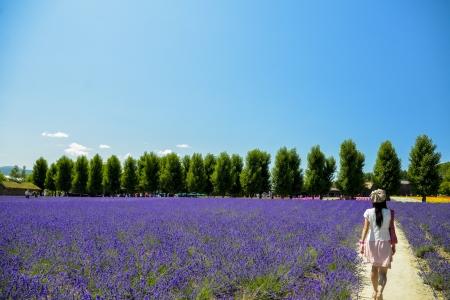 Walk in Lavender garden Stock Photo