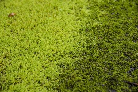 Green moss on the floor photo
