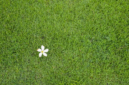 A white flower on green grass photo