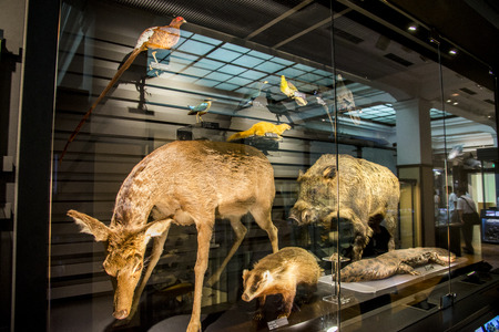 Stuffing animals in National Museum of Nature and Science Japan 報道画像