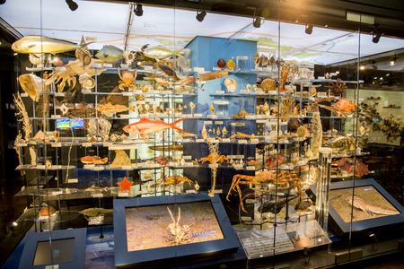 Stuffing aquatic animals in National Museum of Nature and Science Japan