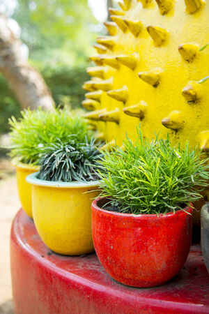Small plant are in the colorful vase photo