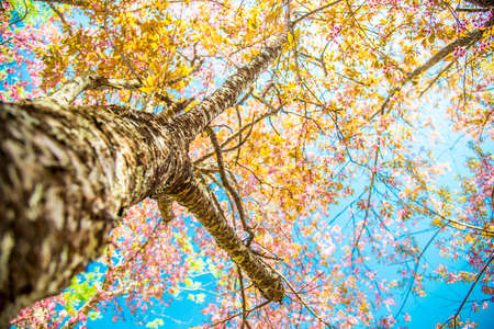 Under branch of pink cherry tree2 photo