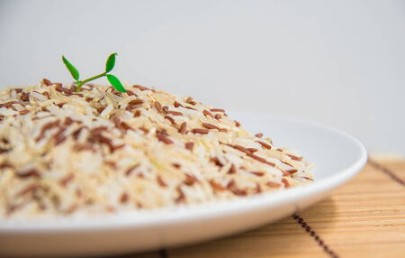 Small plant grow up on rice