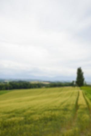 arbol alamo: Un �rbol de �lamo con campo de arroz en el estilo de Blur Foto de archivo