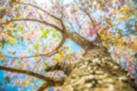 Under branch of pink cherry tree in Blur style photo