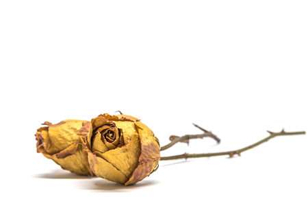 Two Dried rose flower isolated on white background Banque d'images