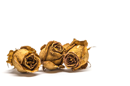 Three dried rose flower isolated on white background
