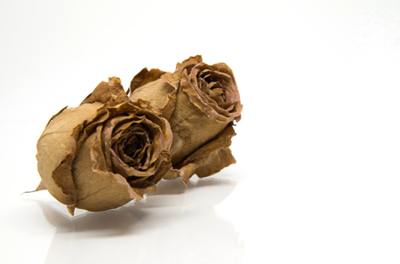 Two Dried rose flower head isolated on white background with reflect shadow Banque d'images