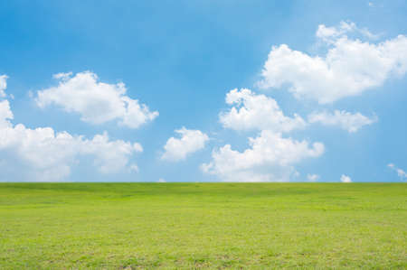 Green field and blue sky. Nature background. Zdjęcie Seryjne
