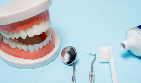Jaw model with dental equipment on a blue background. 免版税图像