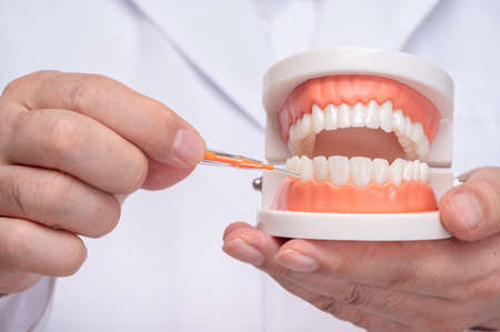A dentist holding a tooth model and an interdental brush.