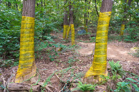 Sticky film wrapped around a tree to catch harmful insects.