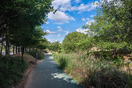 Walkway with clear skies and trees and grass.