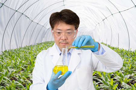 A middle-aged Asian male scientist holding an experimental container in his hand in a green house where plants are growing.