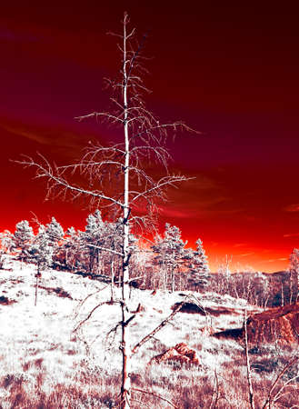 Eerie, burning sky - infrared photography