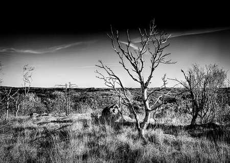 Dark, eerie lanscape - infrared photography Stock fotó