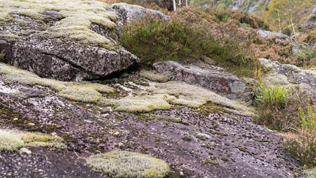 Heather and lichen on rock