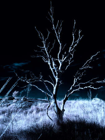 Dark, moody tree - infrared photo