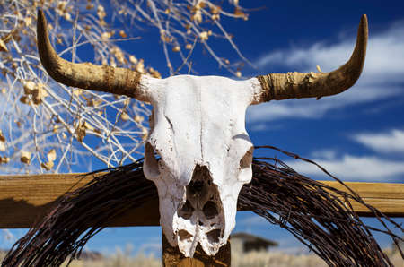 Cow Skull on Fence