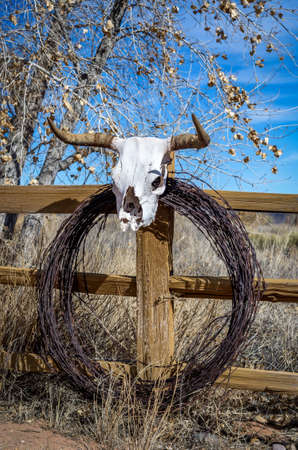 Steer Horns and Barbwire Stock Photo